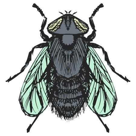 irritate: hand drawn, sketch, cartoon illustration of fly