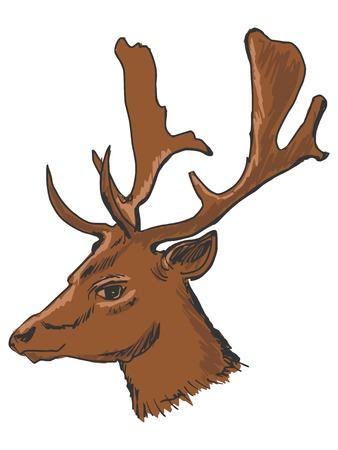 white tail deer: hand drawn, sketch, cartoon illustration of deer