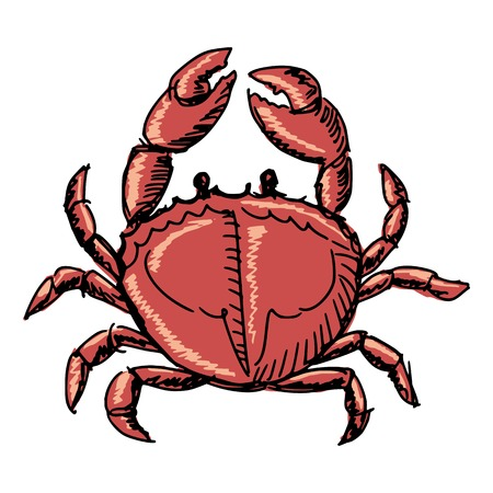 whole creature: hand drawn, sketch, cartoon illustration of crab