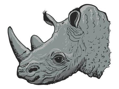 naturalist: hand drawn, sketch, cartoon illustration of rhinoceros
