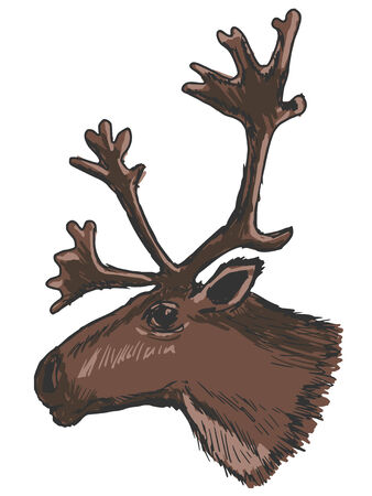 lapland: hand drawn, sketch illustration of head of reindeer