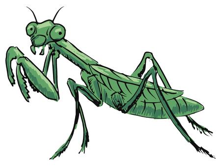 mantis: hand drawn, sketch, cartoon illustration of mantis Illustration
