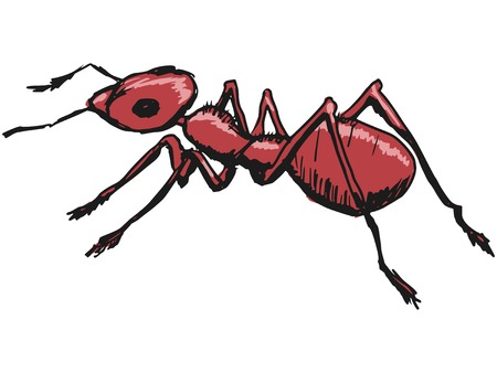 formicidae: hand drawn, sketch, cartoon illustration of red ant