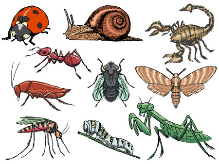 set of sketch illustration of different insects Vector