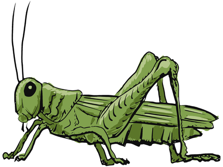 hand drawn, sketch, cartoon illustration of grasshopper Vector