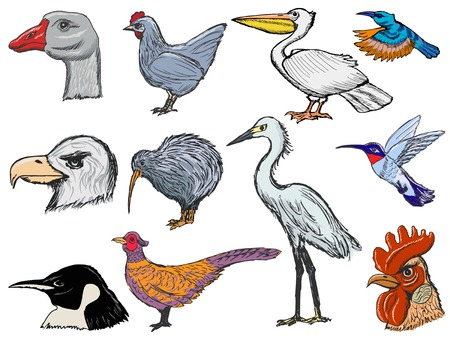 set of sketch illustration of different kinds of birds Vector