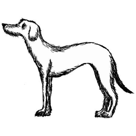 hand drawn, cartoon, sketch illustration of deerhound Vector