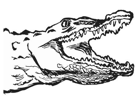 hand drawn cartoon: dibujados a mano, dibujos animados, ilustraci�n esbozo de cocodrilo Vectores