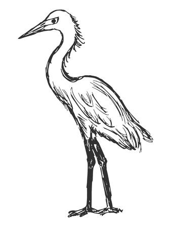 egret: hand drawn, cartoon, sketch illustration of heron