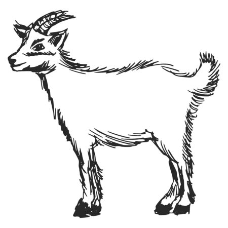 hand drawn, cartoon, sketch illustration of little goat Vector