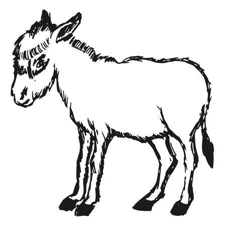 ass donkey: hand drawn, cartoon, sketch illustration of donkey
