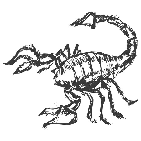 hand drawn, cartoon, sketch illustration of scorpion Vector