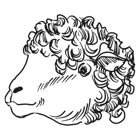 looking away: hand drawn, sketch, cartoon illustration of sheep