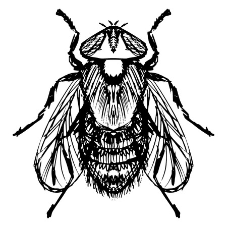 irritate: hand drawn, sketch, cartoon illustration of fly