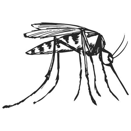 bloodsucker: hand drawn, sketch, cartoon illustration of mosquito