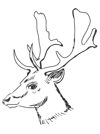 whitetail deer: cartoon hand drawn illustration of deer Illustration