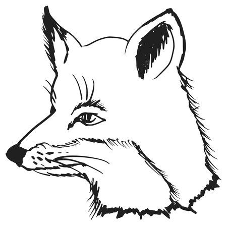 cartoon hand drawn illustration of fox Vector