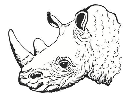 naturalist: cartoon hand drawn illustration of rhinoceros