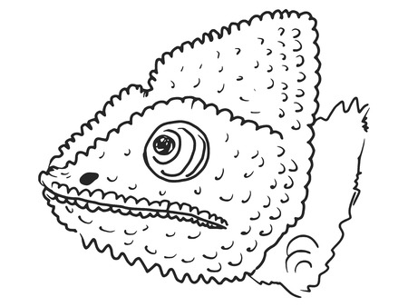 chamaeleo: cartoon hand drawn illustration of chameleon