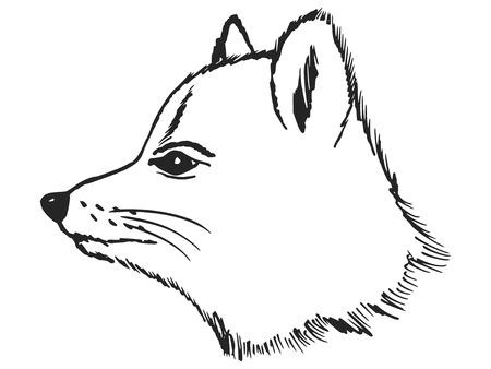 superviser: illustration croquis de renard polaire