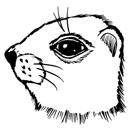 prairie dog: hand drawn, sketch, cartoon illustration of gopher