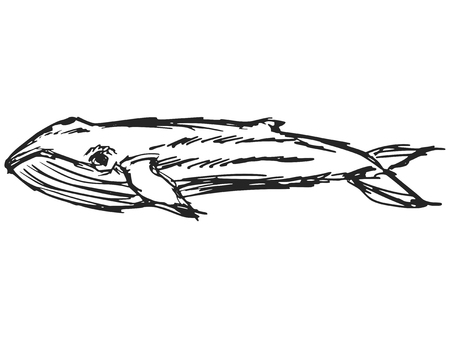 mating: cartoon hand drawn illustration of whale
