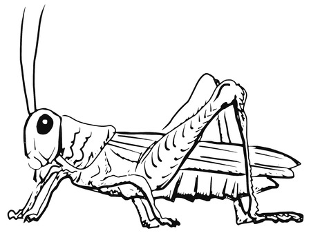 cartoon hand drawn illustration of grasshopper Vector