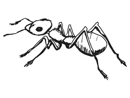 formicidae: cartoon hand drawn illustration of red ant