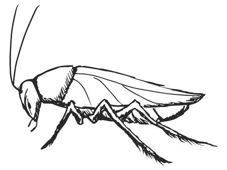 cartoon hand drawn illustration of cockroach