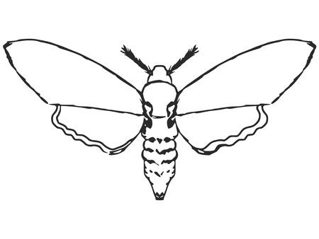 nocturnal: cartoon hand drawn illustration of moth