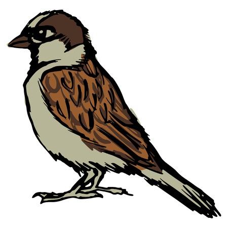 cartoon illustration of sparrow Vector