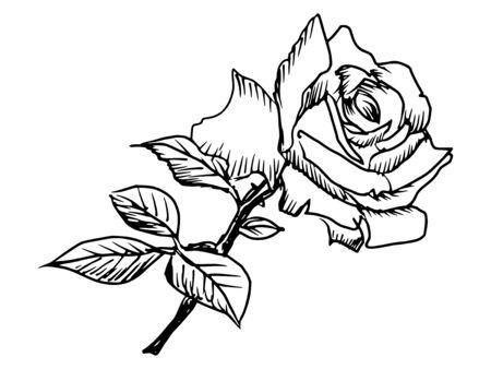 hand drawn black illustration of rose Vector