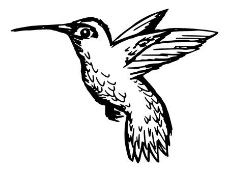 hummingbird: sketch, doodle, hand drawn illustration of hummingbird