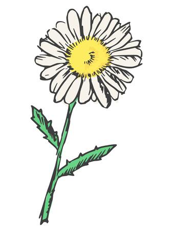 camomiles macro: hand drawn, sketch, black illustration of chamomile