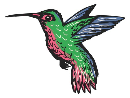 sketch, doodle, hand drawn illustration of hummingbird Vector