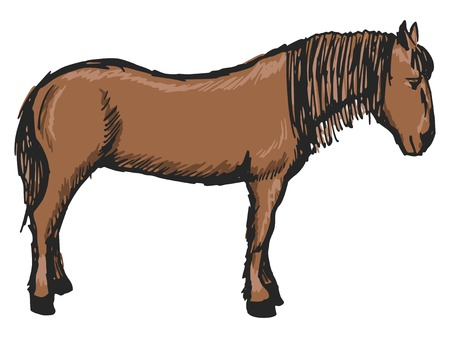 sketch, doodle, hand drawn illustration of horse Vector