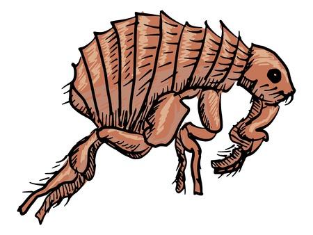itch: sketch, doodle illustration of flea