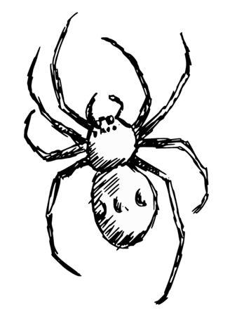 black widow: hand drawn, doodle, sketch illustration of spider