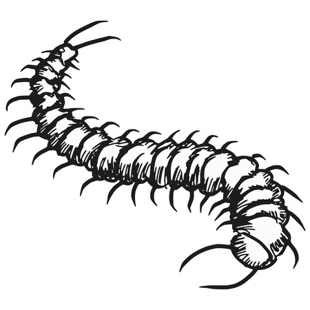 centipede: sketch, doodle illustration of centipede