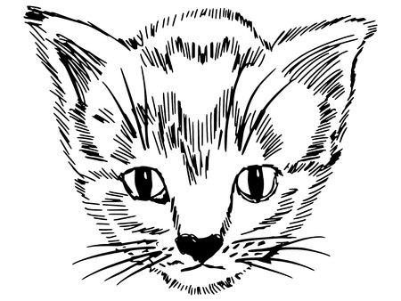 pussy hair: hand drawn, sketch illustration of kitten