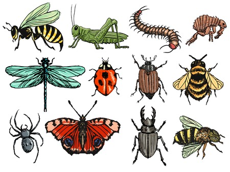 centipede: set of illustration of insects Illustration
