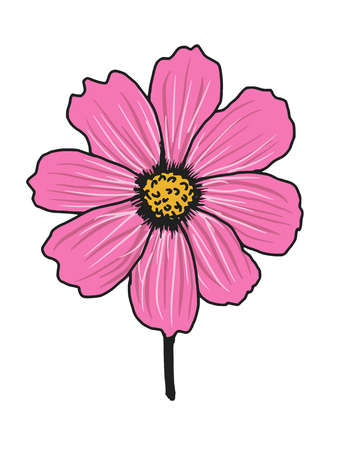 aster:  hand drawn, sketch illustration of cosmos aster