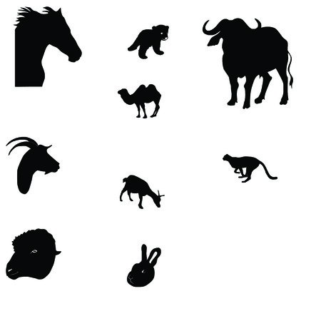 Set of wild animal isolated in white  Vector