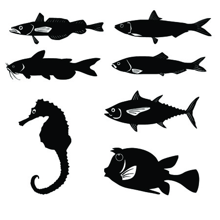 lax: Set of fish isolated in white