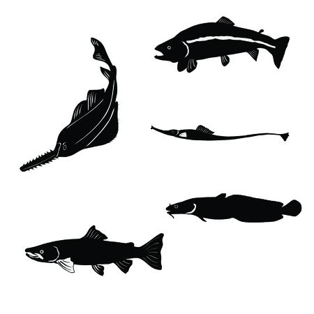 lax: animal, aqua
