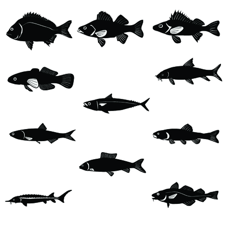 Set of fish isolated in white