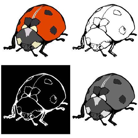 ladybird: Editable vector illustrations in variations. Ladybird Illustration