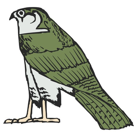 sketch illustration of falcon, ancient Egyptian symbol