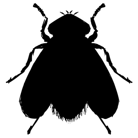 ordinary: black silhouette of ordinary fly Illustration