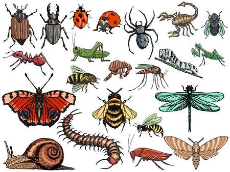 set of sketch, editable illustrations of insects Ilustração